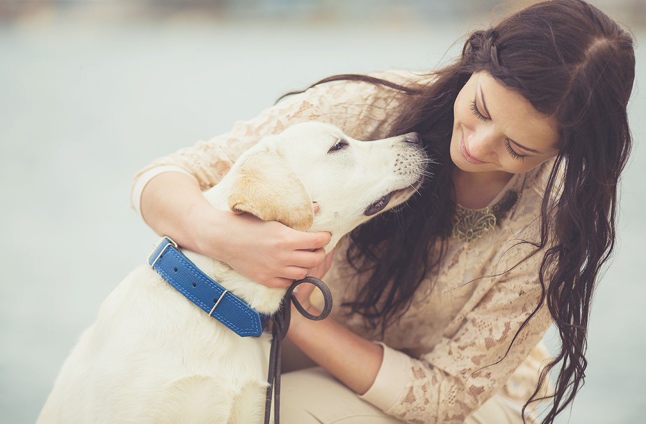 What services and treatments make up a good animal hospital?